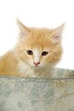 Gattino in secchio Fotografie Stock Libere da Diritti