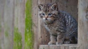 Gattino selvaggio Immagini Stock