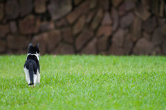 Gattino selvaggio su prato inglese dei giardini botanici di sisulu di Durbans Walter fotografie stock libere da diritti