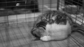 Gattino senza tetto triste che dorme nella gabbia di ferro al riparo dell'animale domestico, adozione aspettante archivi video