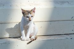 Gattino senza tetto triste solo vicino alla parete sulla via della città fotografia stock