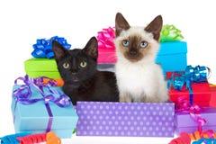 Gattino siamese e nero nei regali di compleanno Immagini Stock