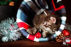 Gattino siberiano lanuginoso con le decorazioni di Natale Priorità bassa del Brown Fotografia Stock