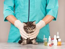 Gattino siberiano sveglio Fotografie Stock Libere da Diritti