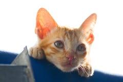 Gattino solo Immagini Stock