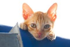 Gattino solo Fotografie Stock Libere da Diritti