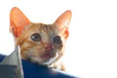 Gattino solo Fotografia Stock