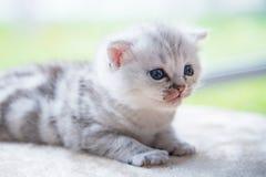 Gattino solo sveglio Fotografia Stock Libera da Diritti