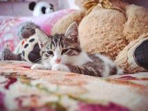 Gattino sonnolento fotografie stock libere da diritti