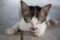 Gattino sonnolento sveglio Immagini Stock