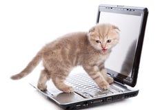 Gattino sopra bianco Immagini Stock Libere da Diritti
