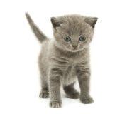 Gattino sopra bianco Fotografia Stock Libera da Diritti