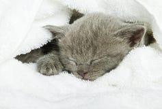 Gattino sopra bianco Immagine Stock Libera da Diritti