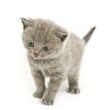 Gattino sopra bianco Fotografia Stock