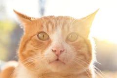 Gattino sorpreso immagine stock libera da diritti