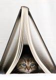 Gattino sotto il libro Fotografia Stock