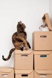gattino spaventato Immagini Stock