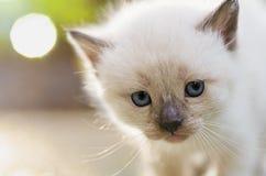 Gattino spaventato che esamina macchina fotografica Immagine Stock
