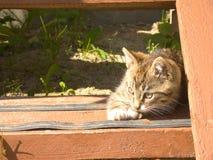 Gattino a strisce divertente Immagini Stock
