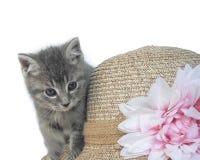 Gattino a strisce grigio sui precedenti di un cappello immagini stock