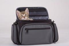 Gattino a strisce nel sacchetto fotografie stock