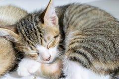 Gattino a strisce nero di sonno fotografia stock libera da diritti