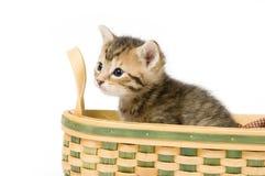 Gattino a strisce in un cestino Fotografia Stock