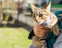 Gattino su un guinzaglio all'aperto Fotografie Stock Libere da Diritti