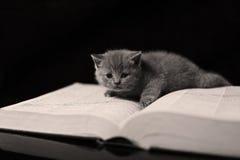 Gattino su un libro Immagini Stock Libere da Diritti