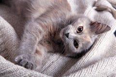 Gattino su una coperta di lana fotografia stock libera da diritti