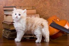 Gattino su una tabella Fotografia Stock Libera da Diritti