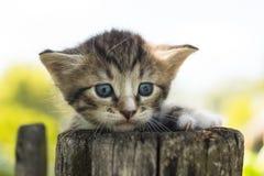 Gattino sul recinto Fotografia Stock