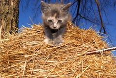 Gattino sulla balla di fieno della paglia Fotografie Stock