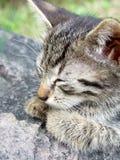 Gattino sulla roccia Immagini Stock Libere da Diritti