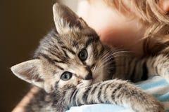 Gattino sulla spalla del ragazzo all'aperto Fotografie Stock Libere da Diritti