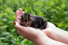 Gattino sulle mani Fotografia Stock