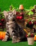 Gattino sveglio Immagini Stock Libere da Diritti