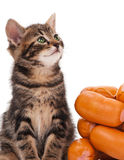 Gattino sveglio Fotografie Stock