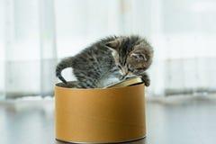 Gattino sveglio in casella Fotografie Stock