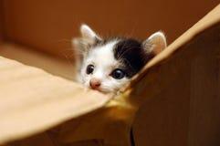 Gattino sveglio in casella Immagini Stock Libere da Diritti