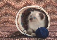 Gattino sveglio in cestino con filato blu Fotografie Stock