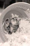 Gattino sveglio che dice ciao, zampa su Fotografia Stock Libera da Diritti