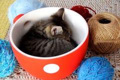 Gattino sveglio che dorme in una ciotola circondata dall'palle di lana Fotografia Stock Libera da Diritti