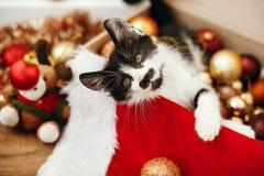 Gattino sveglio che gioca con il rosso e le bagattelle in scatola, ornamenti a dell'oro fotografie stock libere da diritti