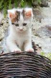 Gattino sveglio che guarda fuori sopra un canestro d'attaccatura fotografia stock libera da diritti
