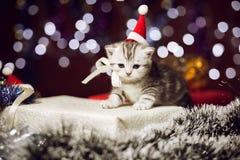 Gattino sveglio che porta il cappello di Santa che si siede sul contenitore di regalo Immagine Stock Libera da Diritti