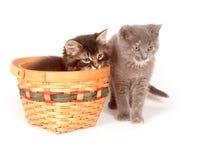 Gattino sveglio che si siede in un cestino Immagine Stock Libera da Diritti
