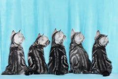 Gattino sveglio cinque dalla parte posteriore Fotografie Stock