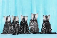 Gattino sveglio cinque dalla parte posteriore Fotografia Stock Libera da Diritti