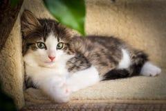 Gattino sveglio con gli occhi verdi Fotografia Stock